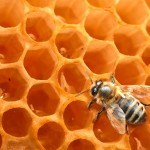Apitherapy: Honey, Pollen, Propolis, Royal Jelly, and more for your health