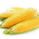 Transgenic Corn and Intransigence